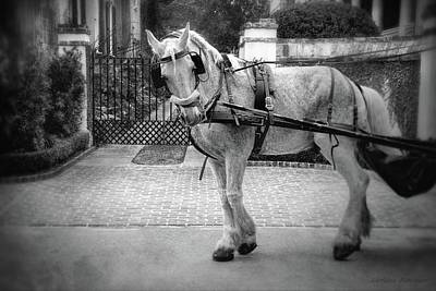 Photograph - Charleston Carriage Horse Black And White by Melissa Bittinger