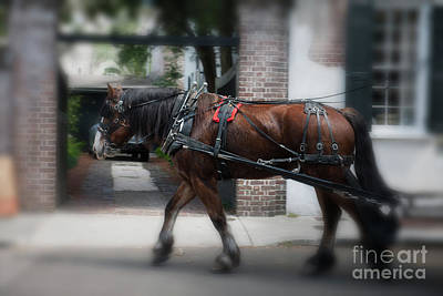 Photograph - Charleston Carriage Ride by Dale Powell