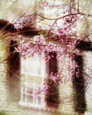 Photograph - Charleston Cherry Blossom by Melissa Bittinger