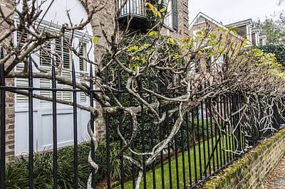 Photograph - Charleston Fence by John McGraw