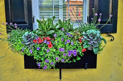 Photograph - Charleston Flower Box 7 by Allen Beatty