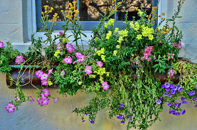 Photograph - Charleston Flower Box 9 by Allen Beatty