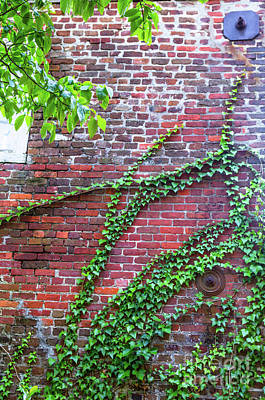 Photograph - Charleston Hurricane Bolts by Dale Powell