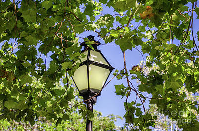 Photograph - Charleston Lamp Post by Dale Powell
