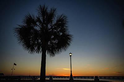 Photograph - Charleston Palm Tree Sunrise by Anthony Doudt