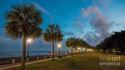 Photograph - Charleston Palms by Robert Loe