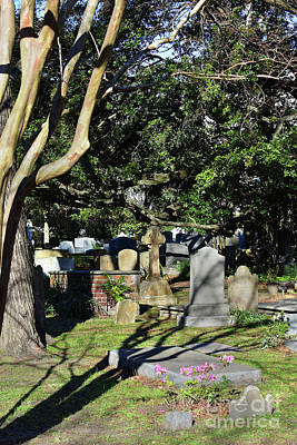 Photograph - Charleston Resting Place by Skip Willits