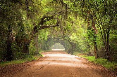 Mist Photograph - Charleston Sc Edisto Island Dirt Road - The Deep South by Dave Allen