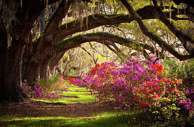 Morning Light Photograph - Charleston Sc Magnolia Plantation Gardens - Memory Lane by Dave Allen