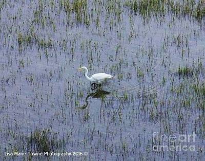 Wall Art - Photograph - Charleston Wildlife 1 by Lisa Marie Towne