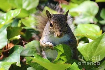 Wall Art - Photograph - Charleston Wildlife. Squirrel by Lisa Marie Towne