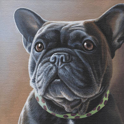 Bulldog Oil Painting - Charlie  by Steven Tetlow