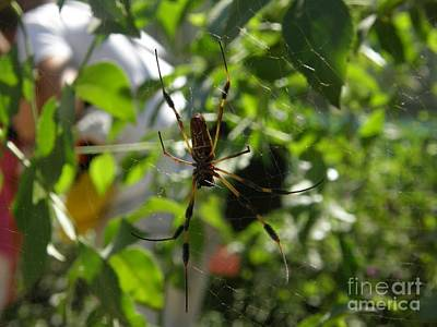 Web Photograph - Charlie The Spider by Leah McPhail