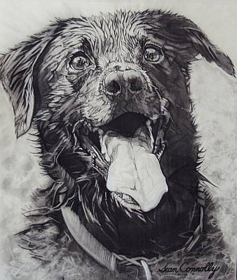 Drawing - Charlie Dog by Sean Connolly