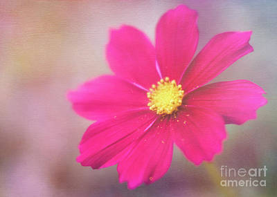Photograph - Charming Cosmos by Anita Pollak