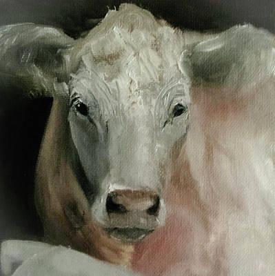 Painting - Charolais Cow Painting by Michele Carter