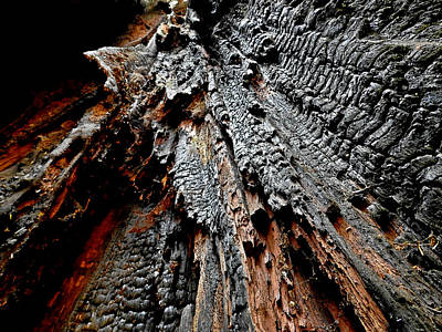 Photograph - Charred Cedar by Brian Chase