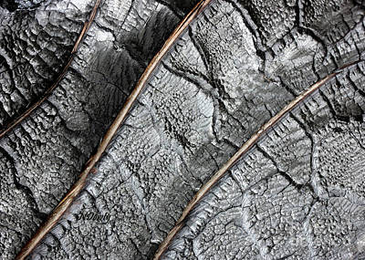 Photograph - Charred Pine Bark by Natalie Dowty