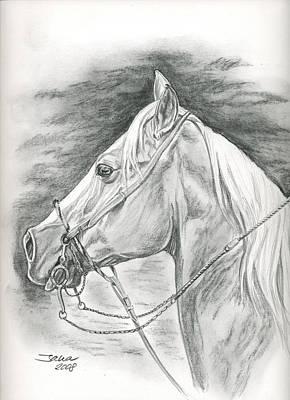 Charro Drawing - Charros Horse by Jana Goode