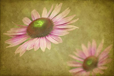 Cone Flower Photograph - Chase Me by Rebecca Cozart