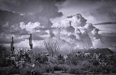 Photograph - Chasing Clouds Again In Black And White  by Saija Lehtonen