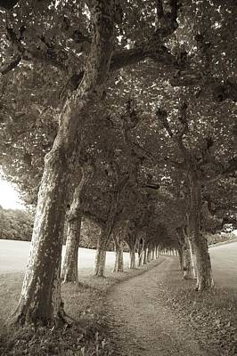 Vevey Photograph - Chateau Series, Tree-lined Path by Colleen Williams