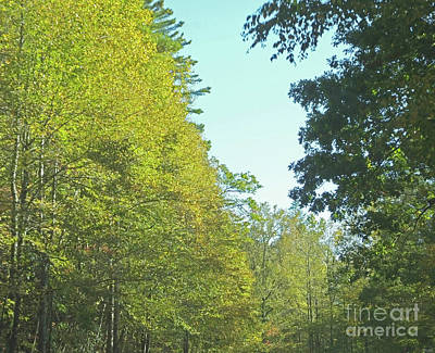 Photograph - Chattahoochie National Forest 2 by Lizi Beard-Ward