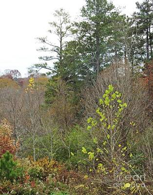 Photograph - Chattahoochie Nature Center  Field Rosewll Ga Late Fall by Lizi Beard-Ward