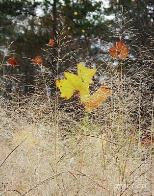 Photograph - Chattahoochie Nature Center Rosewll Ga Late Fall by Lizi Beard-Ward