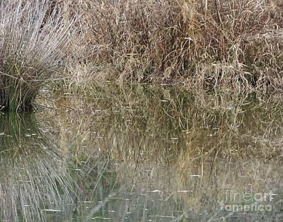 Photograph - Chattahoochie River Grasses by Lizi Beard-Ward