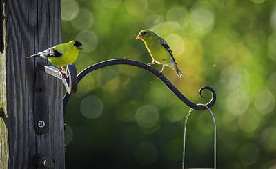 Photograph - The Conversation by Francisco Gomez