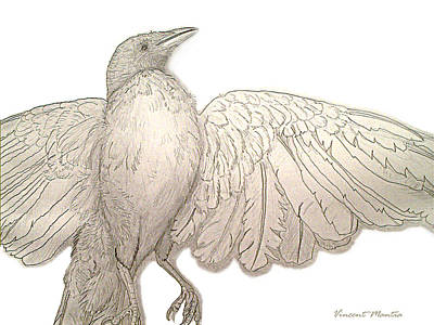 Roadkill Drawing - Chautauqua Crow Drawing by Vincent Mantia