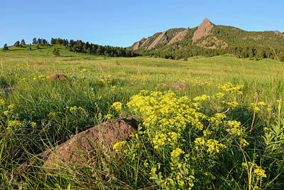 Photograph - Chautauqua Park Wildflowers by Aaron Spong