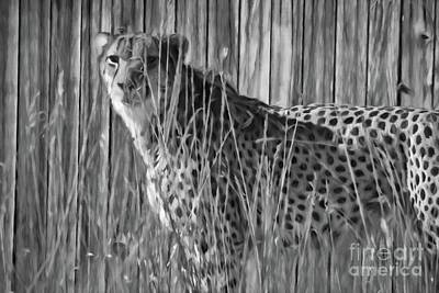 Photograph - Cheetah Charcoal by Steven Parker