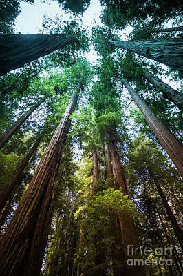 Photograph - Cheatham Grove Humboldt County #1 by Blake Webster