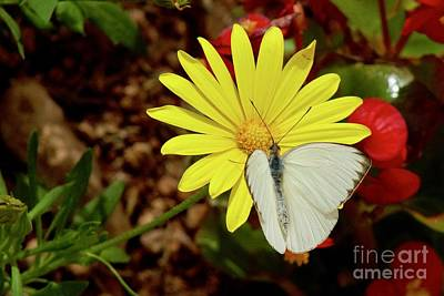 Photograph - Checkered White by Sean Griffin