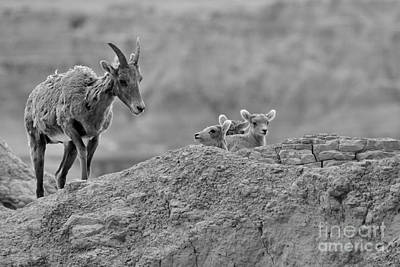 Photograph - Checking On The Youngsters In Black And White by Adam Jewell