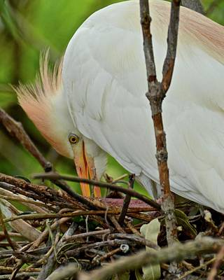 Photograph - Checking The Nest Eggs by Carol Bradley