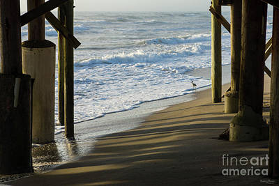 Photograph - Checking The Shoreline by Jennifer White