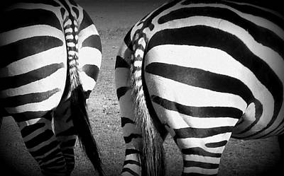 Black And White Of Zebras Photograph - Cheek To Cheek by Karen Cook
