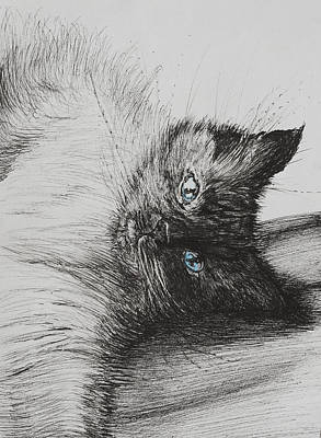 Kittens Drawing - Cheeky Baby by Vincent Alexander Booth