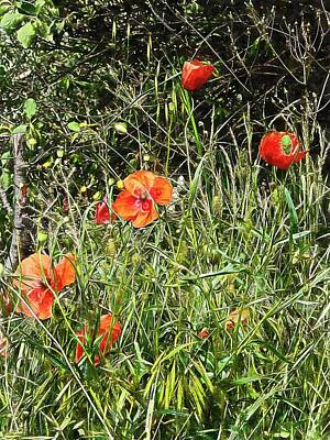 Photograph - Cheeky Chappy Poppies by Dorothy Berry-Lound