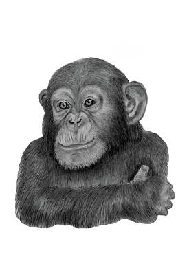 Drawing - Cheeky Chimpanzee by Claire Fagan