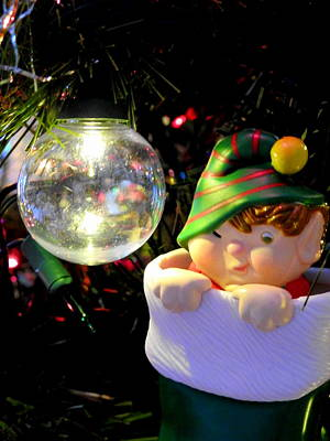 Photograph - Cheeky Elf by Betty-Anne McDonald