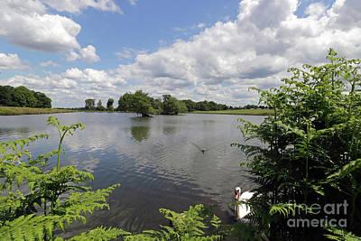 Photograph - Cheeky Swan At Richmond Park London by Julia Gavin