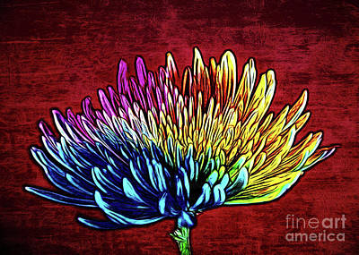 Photograph - Cheerful 147 by Ray Shrewsberry