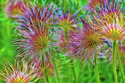 Photograph - Cheerful Electric Blooms by Dee Browning
