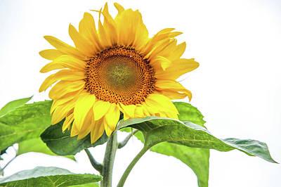 Photograph - Cheerful Flower Cheerful Mood by Jenny Rainbow