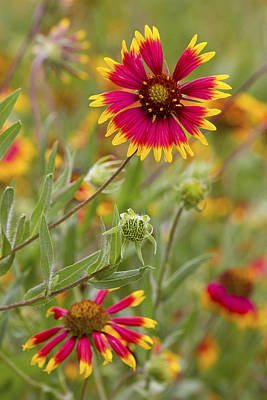 Photograph - Cheerful Greeting by Becky Titus