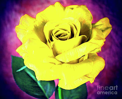Photograph - Cheerful Rose  by Ray Shrewsberry